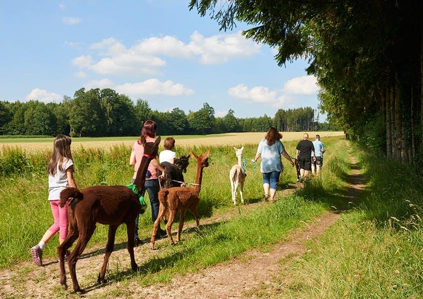 Kinder und Frauen wandern mit Alpakas, blauer Himmel und grüne Wiese.