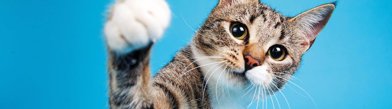 Tierische Tipps Katzenerziehung