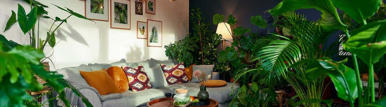 Urban Jungle: Grünpflanzen fürs Wohnzimmer