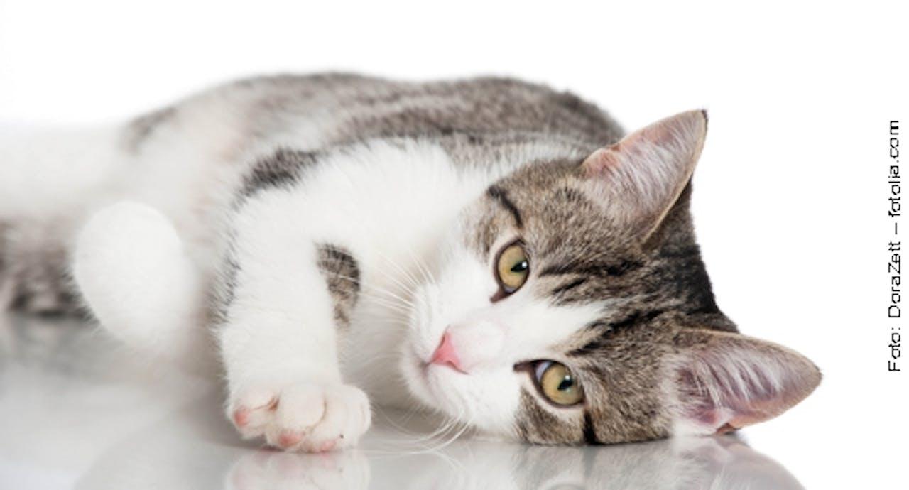 Fellpflege für Katzen