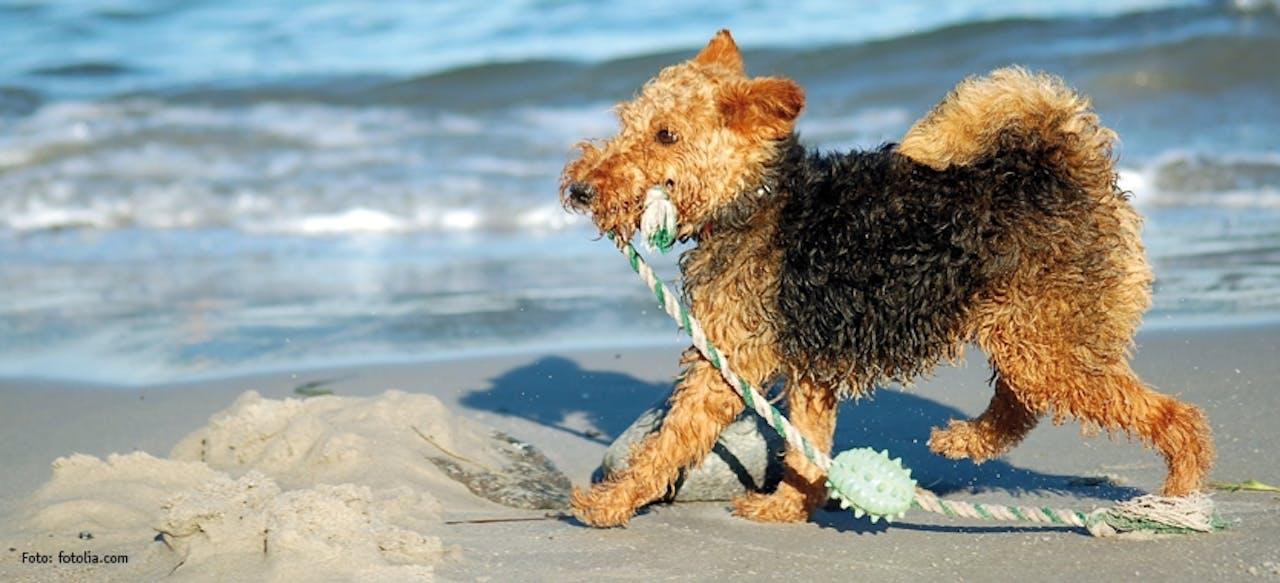 Tipps für den Park oder den Strand mit Hund