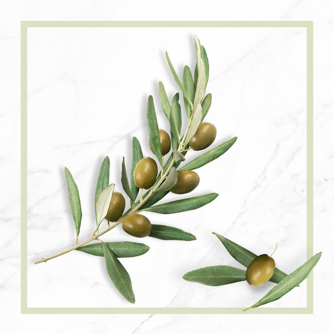 Bio olivaolaj