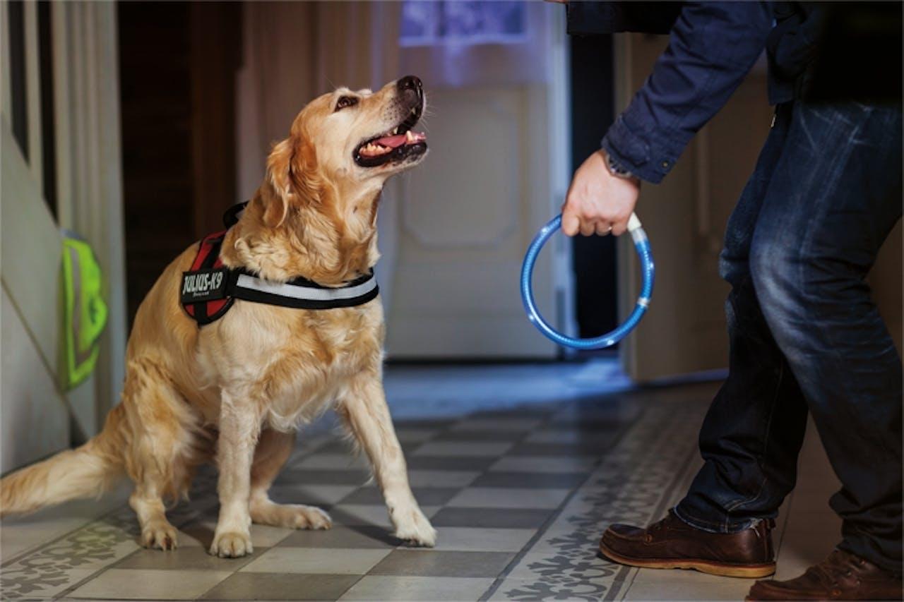 Sichtbarkeit für Hunde im Dunkeln