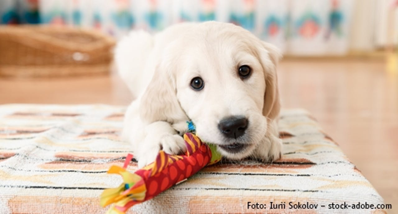 Hunde Erstausstattung