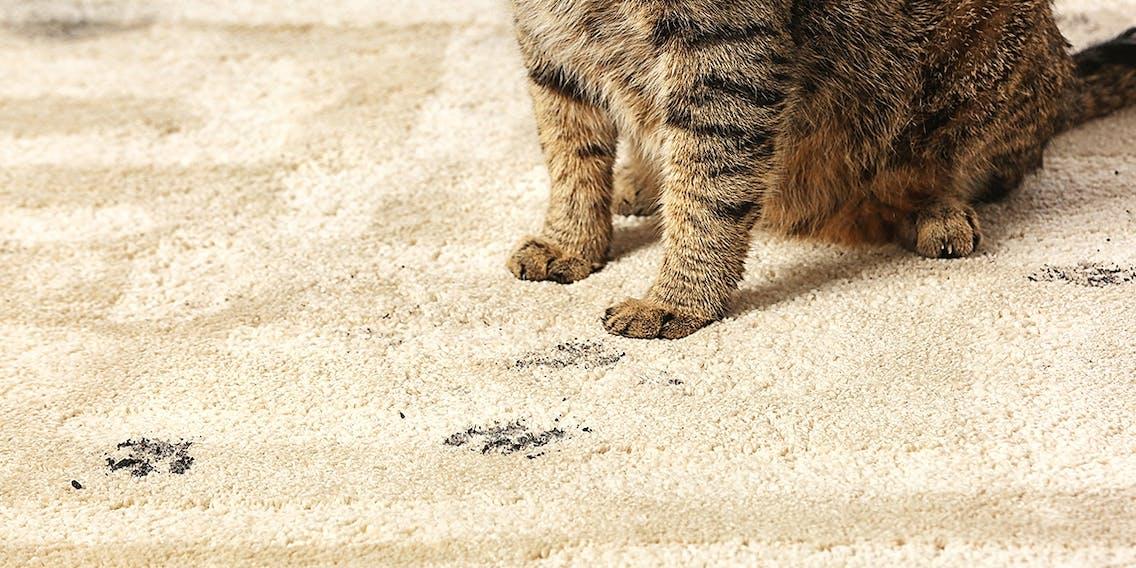 Schmutz im Tierhaushalt beseitigen