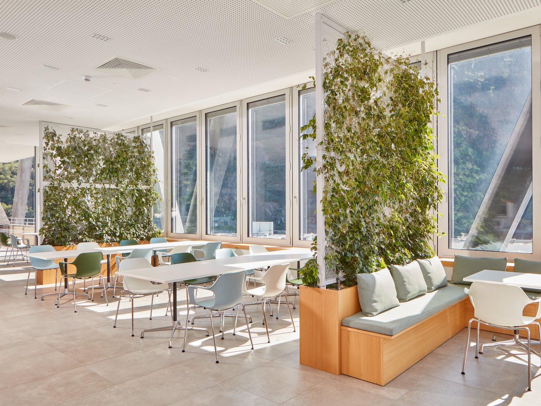 Murs végétaux comme écrans visuels dans les bureaux