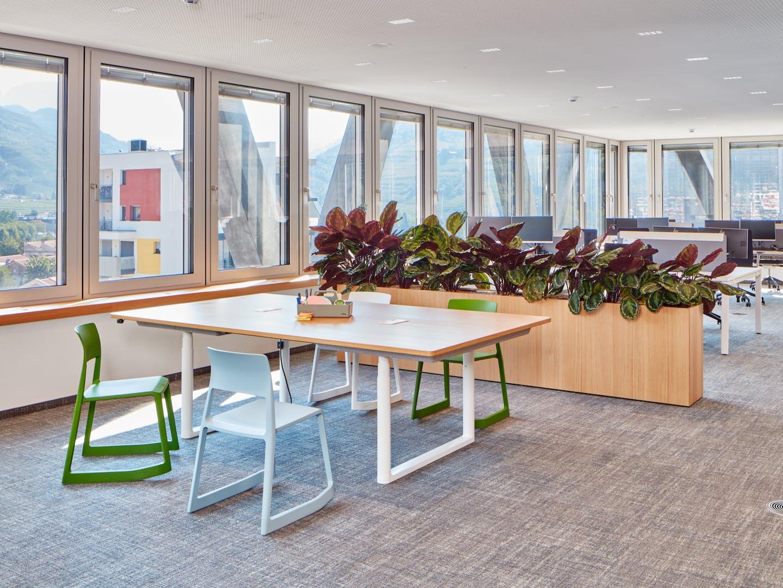 Bacs à plantes comme pare-vue dans le bureau