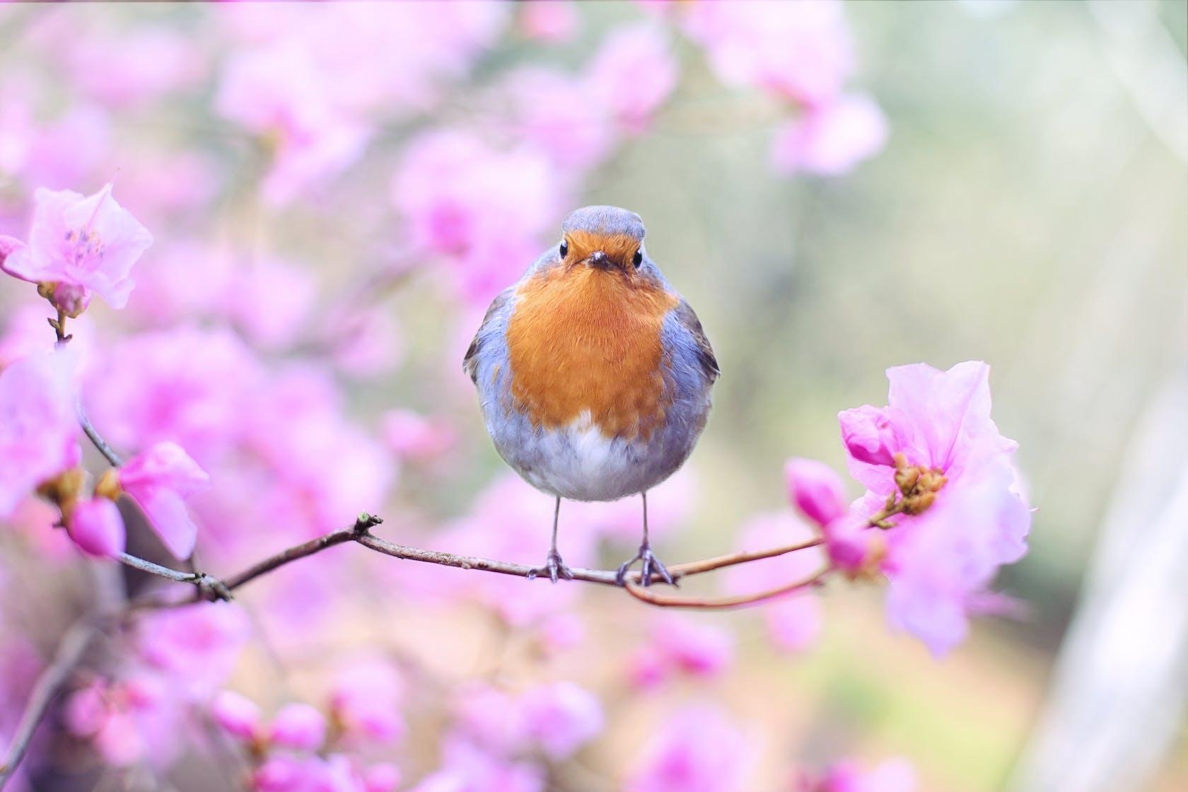 Vogel auf blühendem Ast