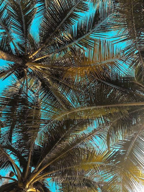 Blauer Himmel und Palmenblätter