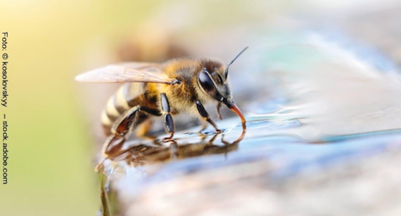 Wasserstelle für Insekten
