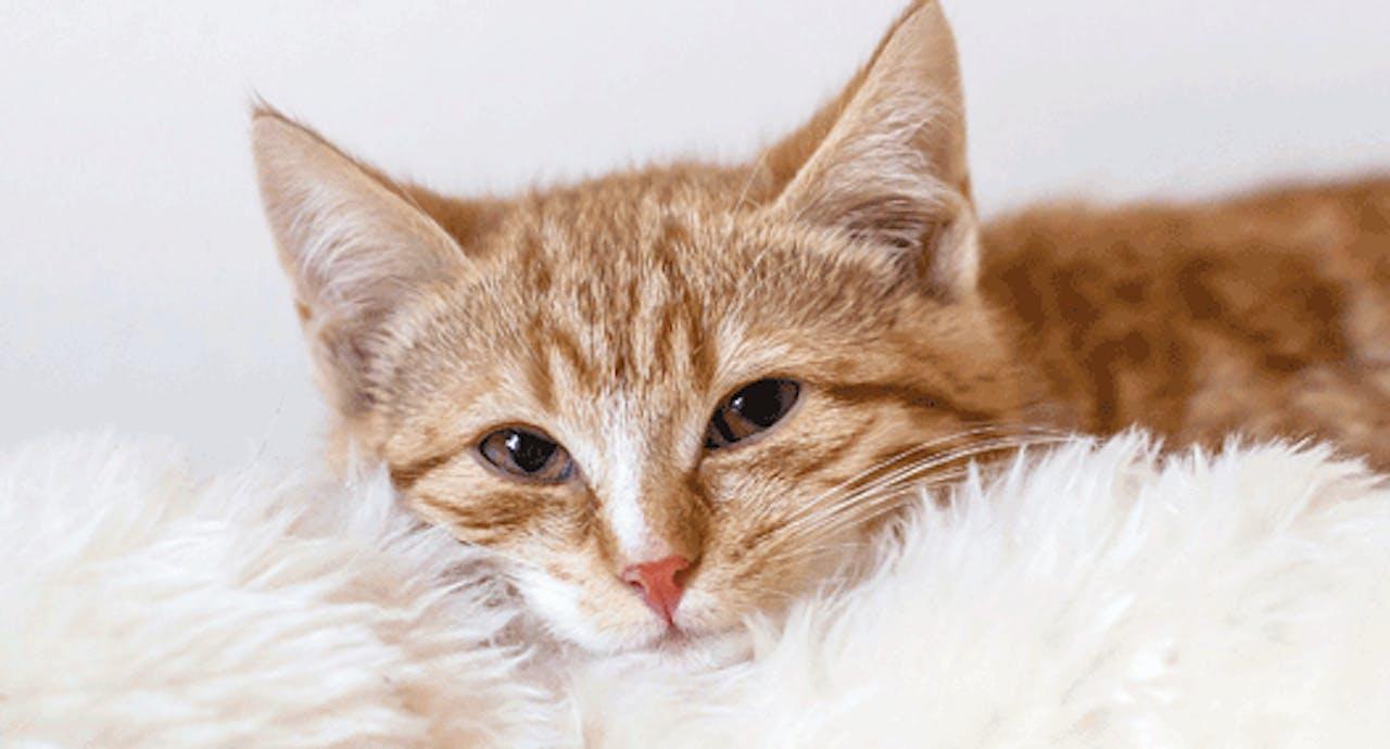 Erkältete Katze