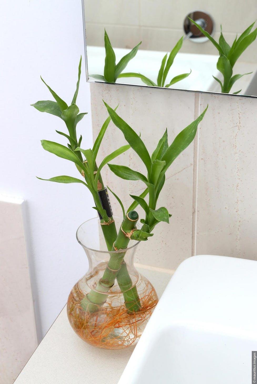 16 Pflanzen für bessere Luft im Badezimmer  WC Frisch