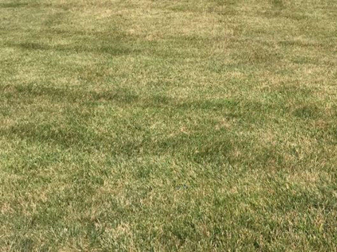 Yellow Grass