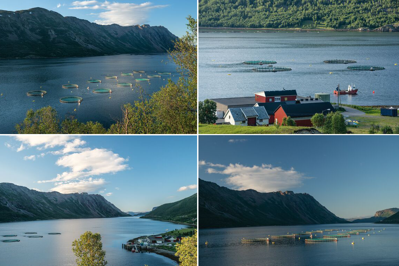 Con gli allevamenti di salmoni, le acque incontaminate vengono a contatto con parassiti, medicinali e materiale fecale. Alta, Norvegia. BEN MOON