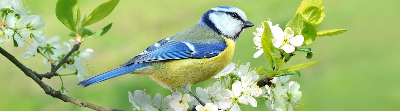 Tierische Tipps für Wildvögel