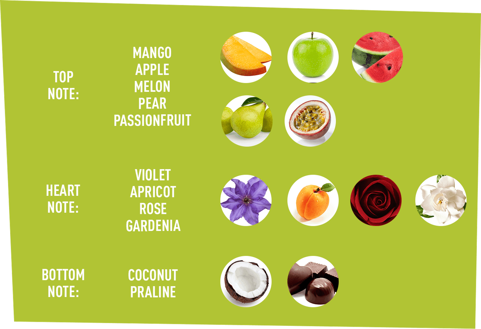 top Note: Mango, Apple, Melon, Pear, Passion Fruit | Hear Npte: Violet, Apricot, Rose, Gardenia | Bottom Note: Coconut, Praline
