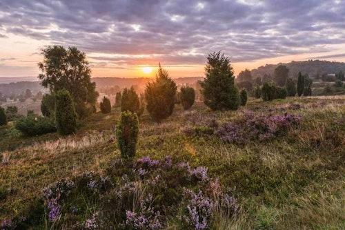 Sonnenuntergang am Wilseder Berg