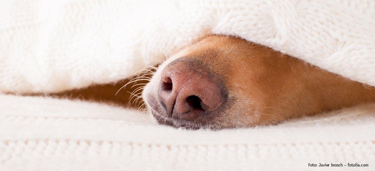 Schlaf- und Ruhephasen von Hunden
