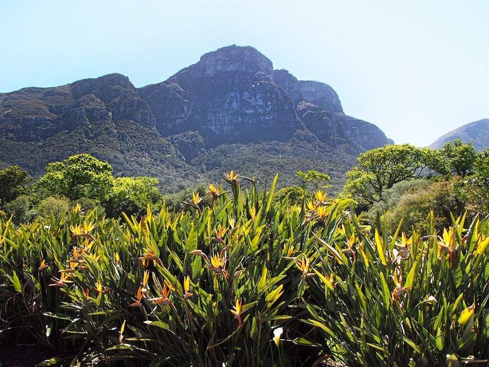 Wildnis von Kirstenbosch