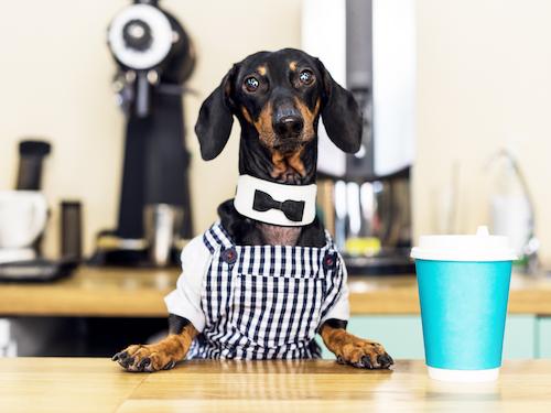 Bisa Main Bareng Anjing, Kunjungi 3 Pet Cafe di Jakarta Ini