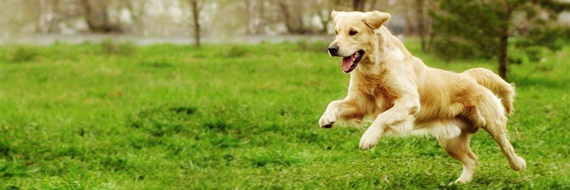 Lebensphasen des Hundes