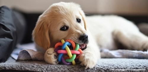 Erstausstattung für Hunde