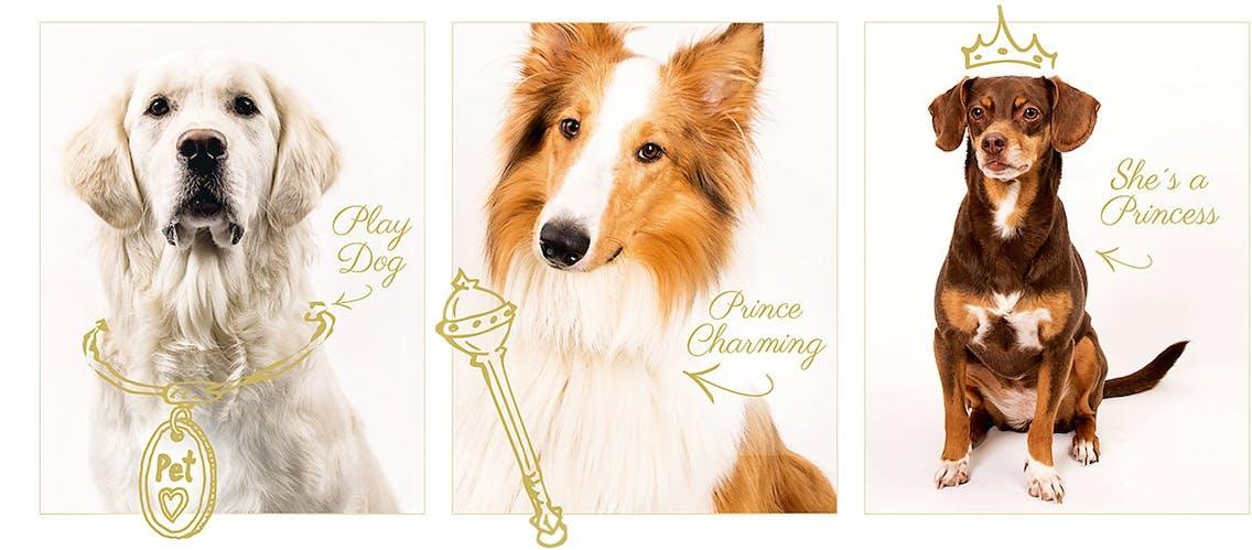 Bürohunde bei pets Premium