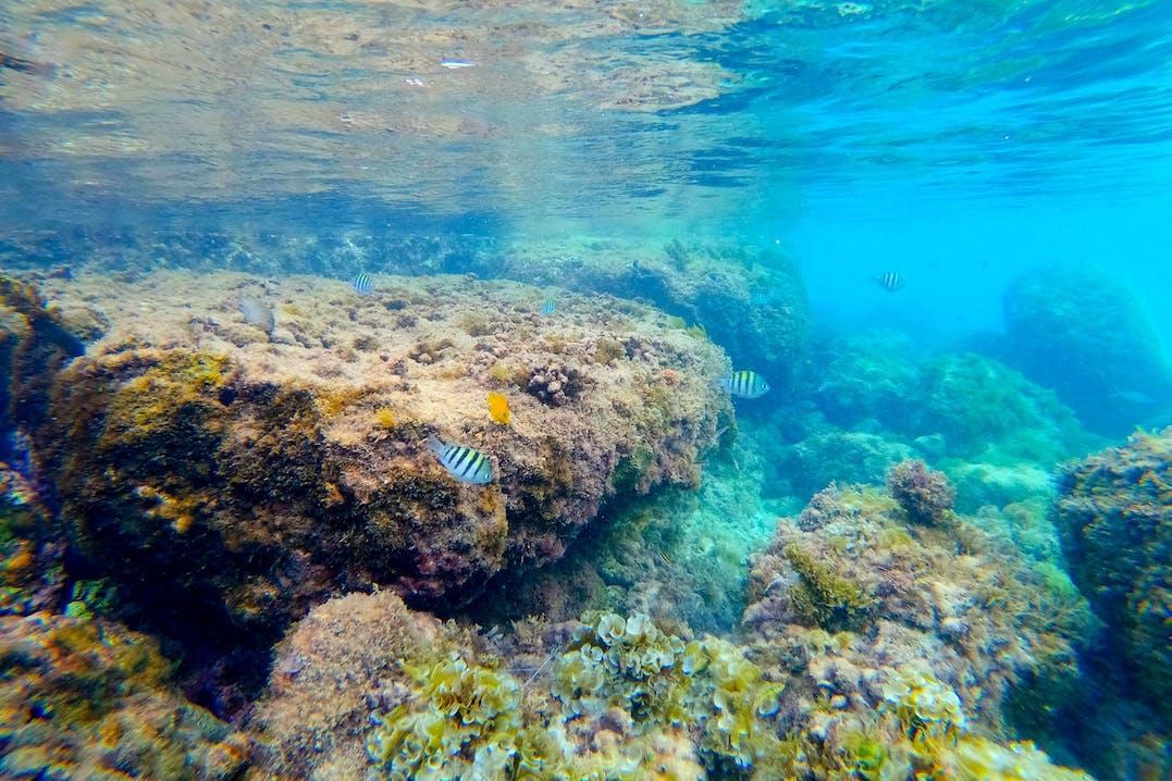 Schnorcheln auf Guadeloupe