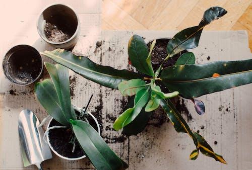 Umgetopfte Pflanzen