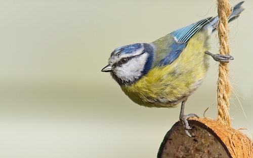 Attract Wild Birds To Your Garden   Petstop.ie