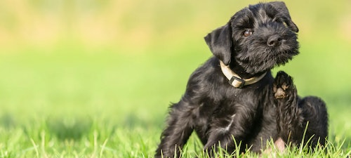 Protect your pets against fleas and ticks this summer