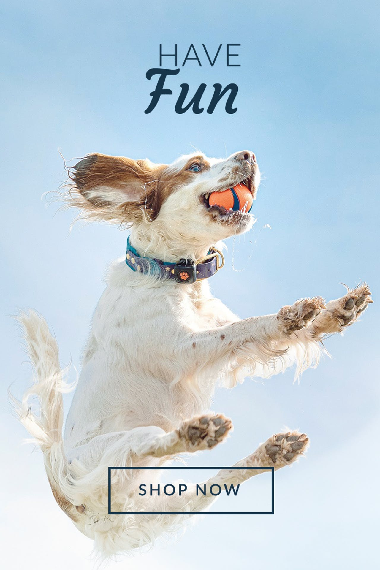 Petstop Home Page | Have Fun