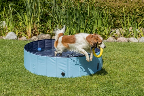 Keep your pets cool this summer