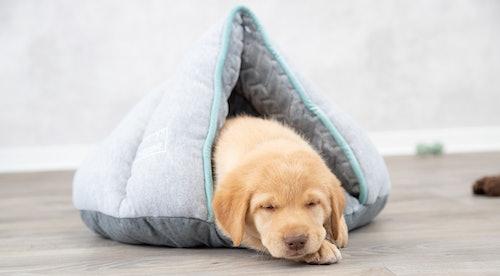 Settling Your Puppy At Night | Petstop - Irish Pet Experts