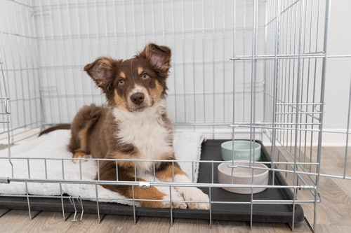 Crate Training Your Puppy | Petstop - Irish Pet Experts
