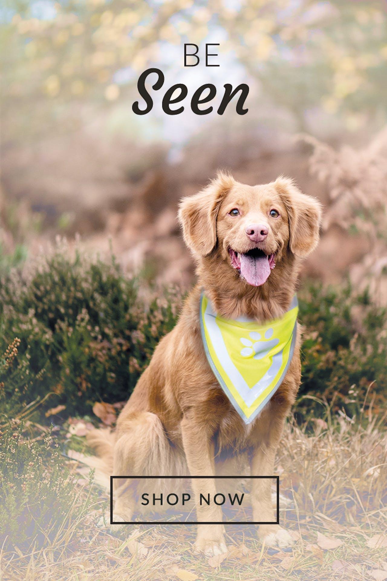 Petstop - Be Seen Image