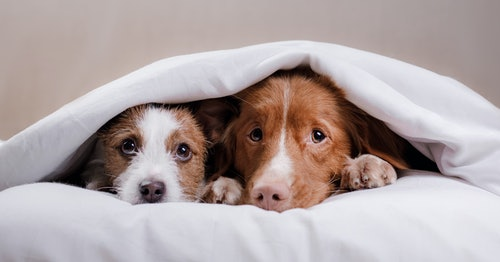 Fireworks and pets: to keep them safe