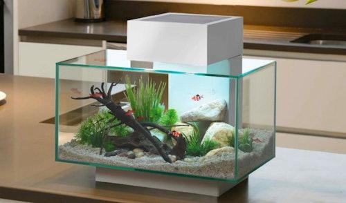 Caring for your new aquarium | Petstop.ie