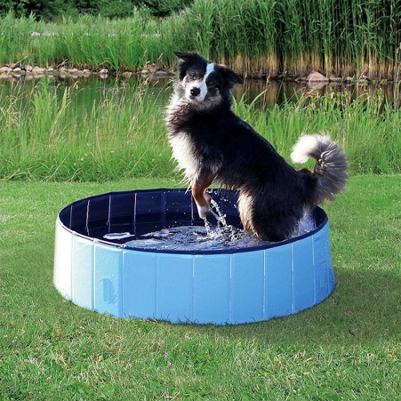 Dog Swimming Pool