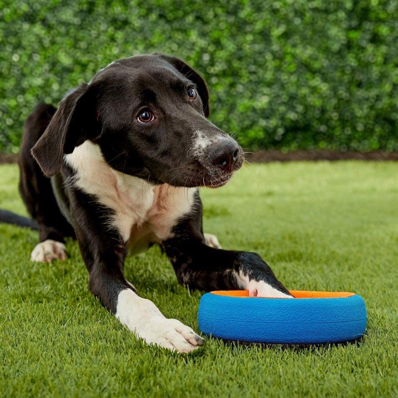 Chuckit! Dog Toy - Fetch Wheel