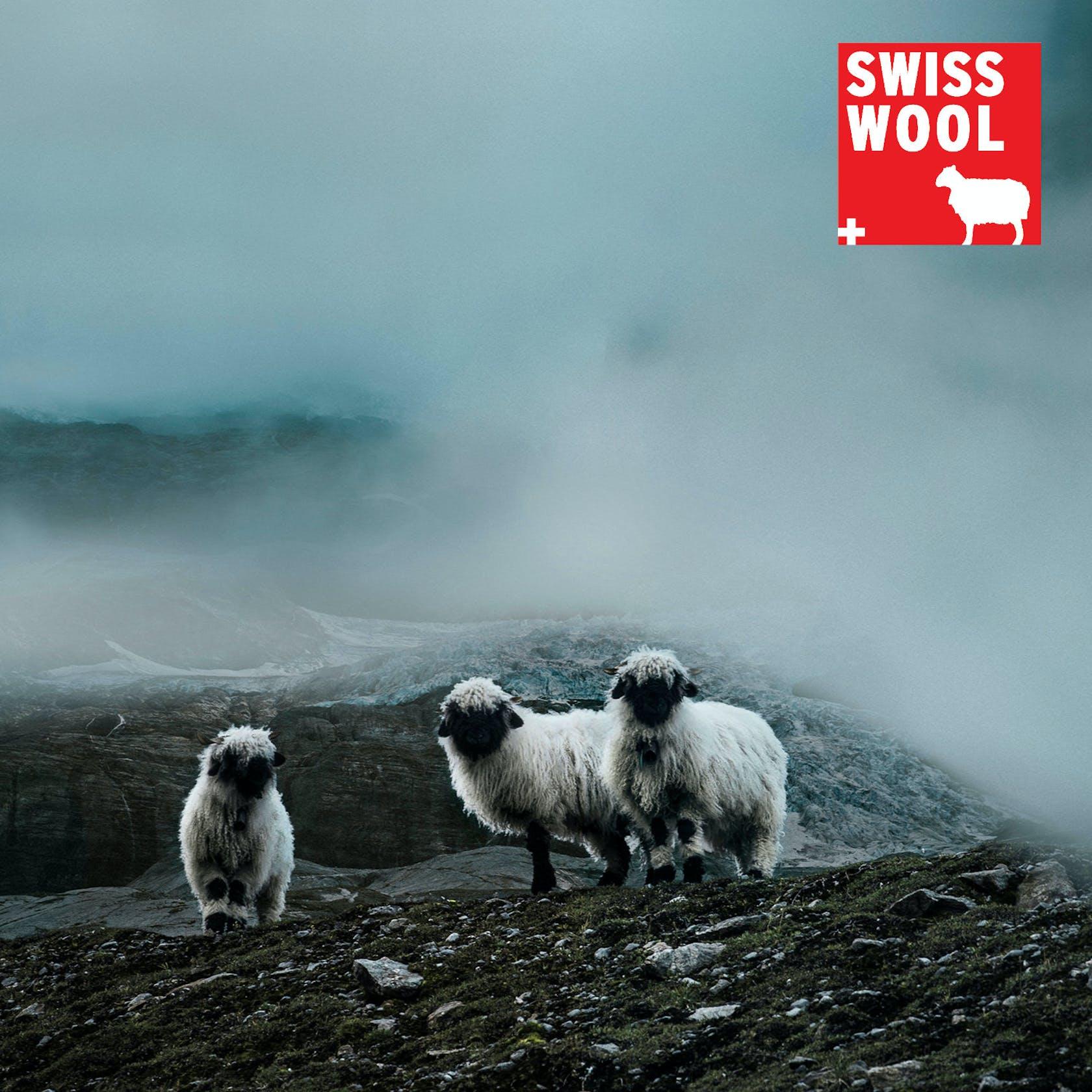 Swisswool Ortovox SPORTLER shop online