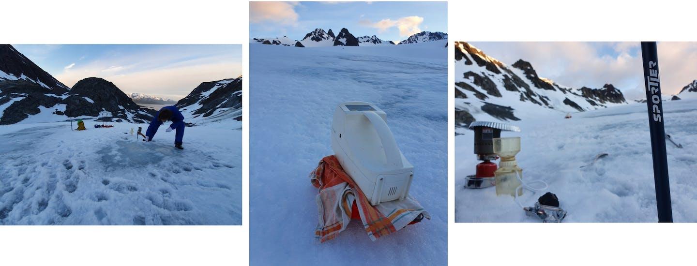 Collage di foto ambiente artico