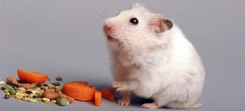 Gesunde Hamsterernährung