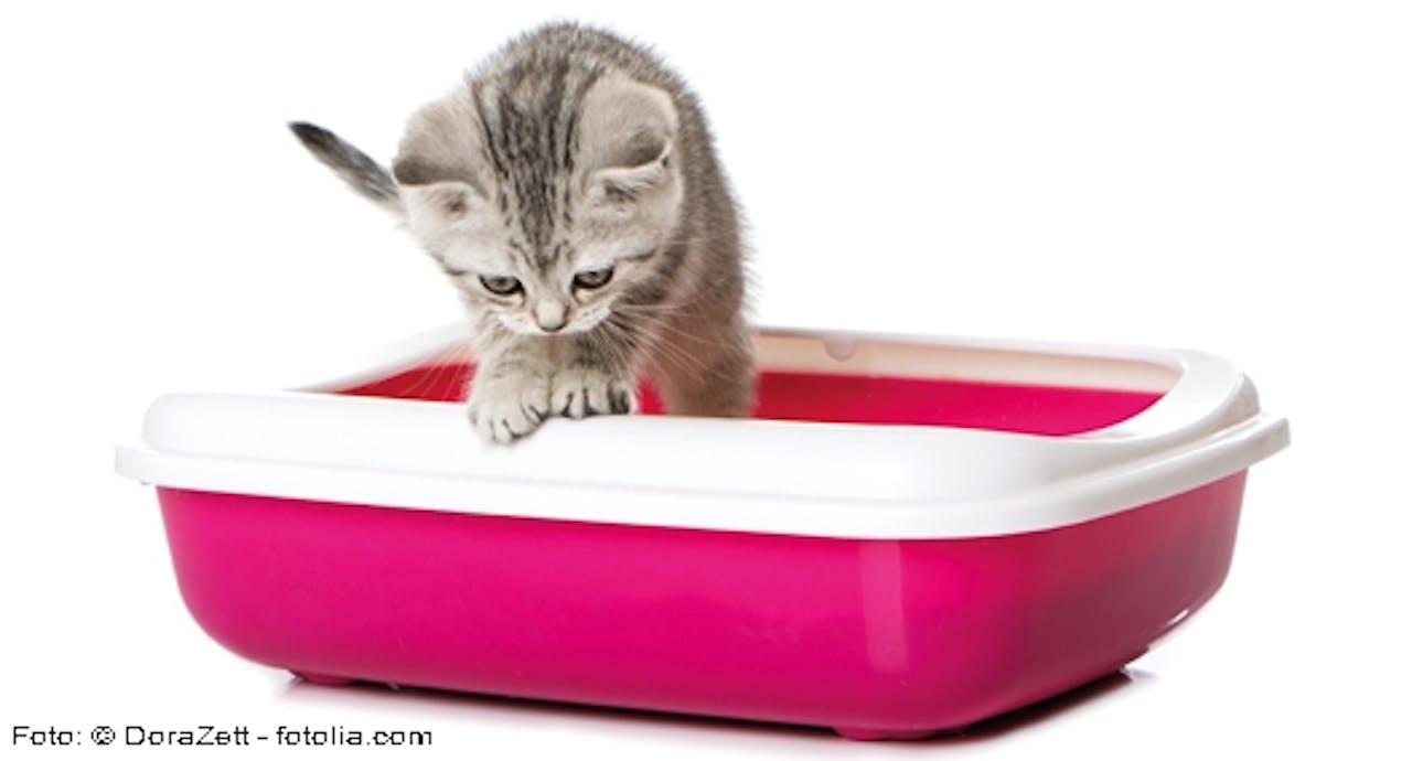 Hygieneregeln bei Kitten