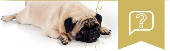 Ist mein Tier zu dick? So erkennen Sie Übergewicht bei Hund und Katze