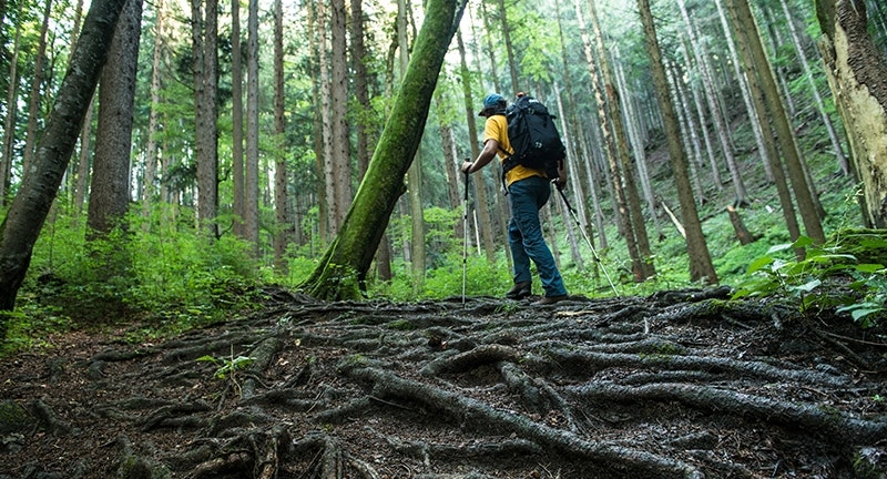 Feuchter, rutschiger, abschüssiger Untergrund ist der ideale Einsatzbereich für Trekkingstöcke.