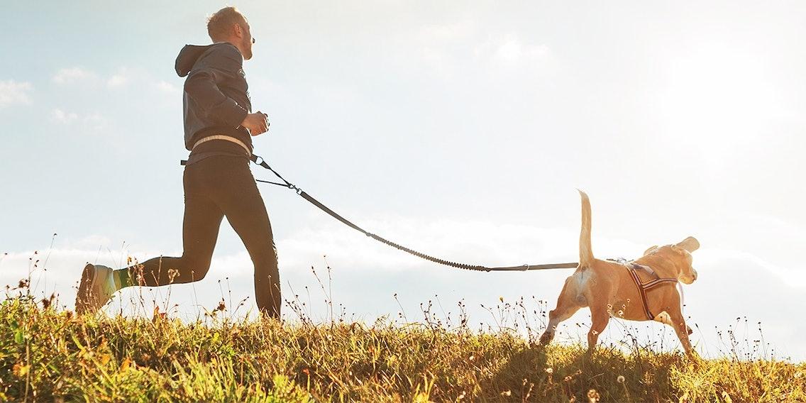 Mann und Hund laufen gemeinsam beim Hundesport Canicross