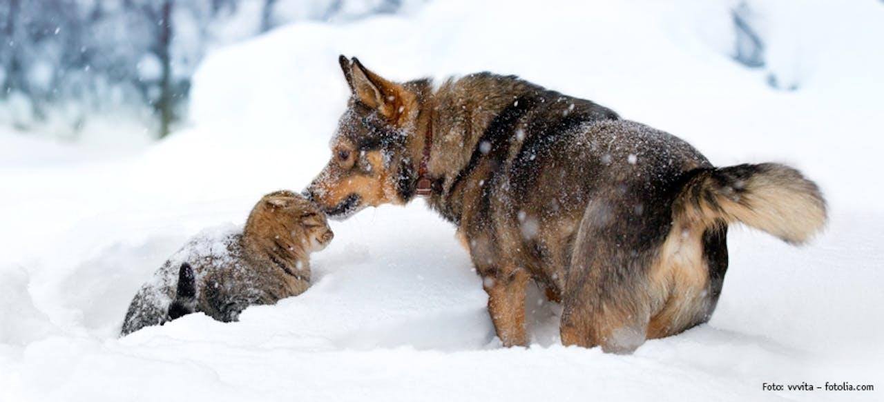 Tipps für Hunde- & Katzenbesitzer in der kalten Jahreszeit