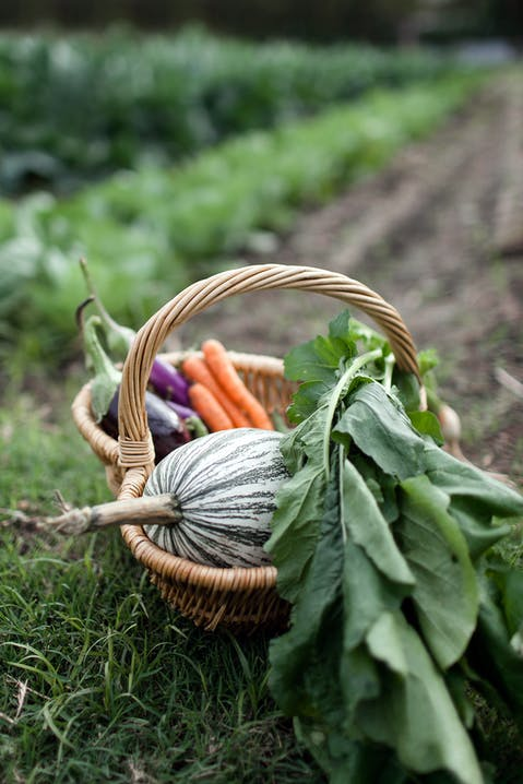 Green pumpkin, aubergines and carrots in a basket in a garden