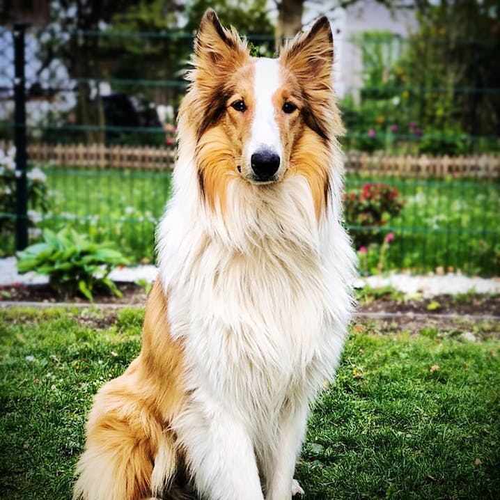 pets Premium Bürohund Finnick